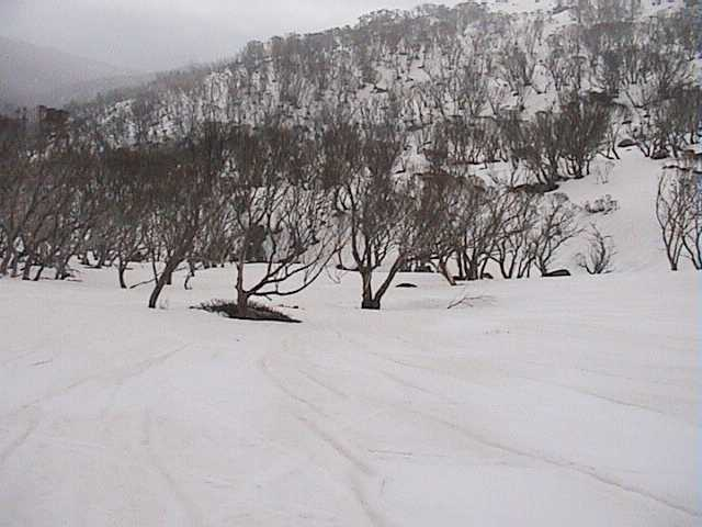 Rain patterns in the snow above lower Bogong Creek (Sunday)