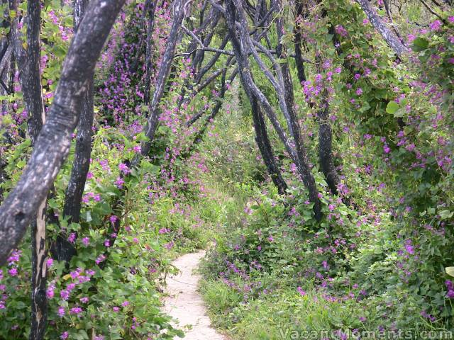 Path from the beach – not exactly alpine